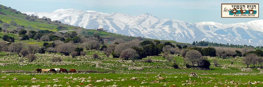הנוף הצפוני של רמת הגולן